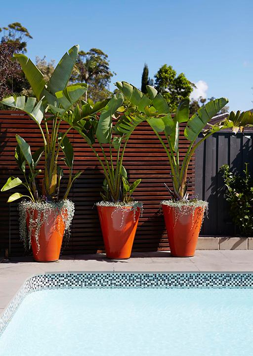 Potted paradise: how to create an urban oasis (фото 7)
