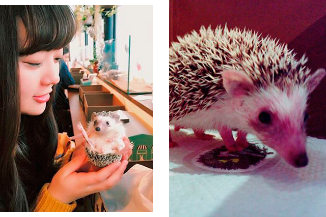 Hate cats? Then this hedgehog café is right up your alley (фото 2)
