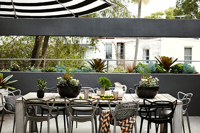 Potted paradise: how to create an urban oasis (фото 2)