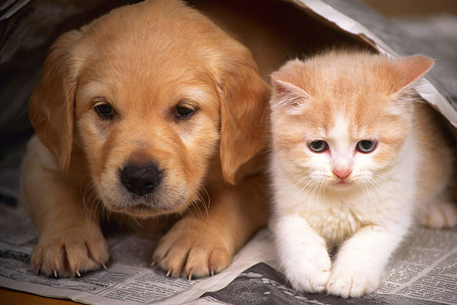The truth about cat and dog people revealed
