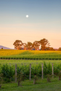 Saturday, October 8: Taking place just a hop, skip and a little drive out of Melbourne, in the Yarra Valley, Shedfest is a festival spanning 14 destinations in the valley, showcasing some of the smaller and lesser-known wineries, restaurants and venues. It's on all weekend, 10am-5pm.