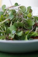 Broccoli sprouts. By providing sulforaphane and inducing both phases of liver detoxification, broccoli sprouts accelerate the body's ability to eliminate toxins.