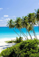 Barbados, Caribbean: Celebrities regularly check into Barbados. Rihanna, Simon Cowell, Mariah Carey, Mark Wahlberg, Jim Carrey, Cara Delevingne, Rachel Bilson, and Gwyneth Paltrow have all been spotted here.