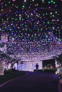 Thursday, December 24: One of those feel-good Christmas events, last year's Christmas in the City (in Canberra, until December 31) lit up the Guinness World Record for the largest display of LED lights and this year it's aiming to smash another.
