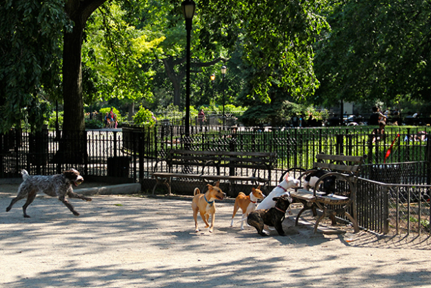 8. Secret chillout spot: I like to stop by the dog parks, especially Macarren Park in Brooklyn and along the West Side Highway. Just watching the dogs run around and play together instantly makes me happy. They are all so funny and having the time of their lives.