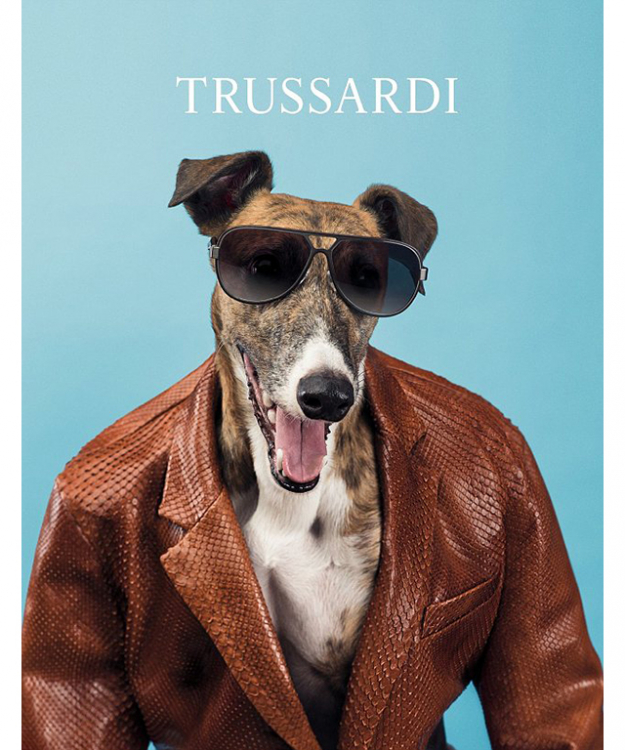 Trussardi's greyhound
