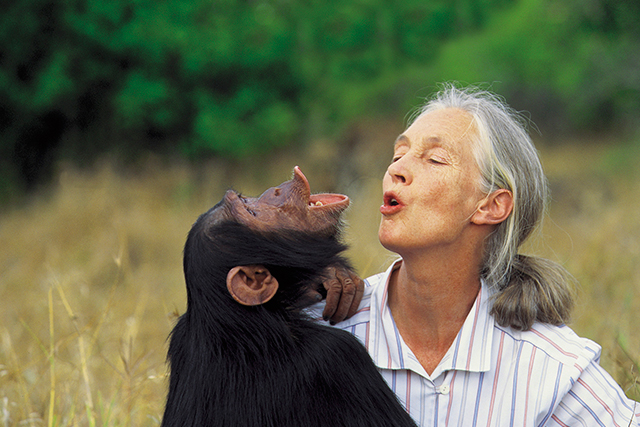 "If there was a voice we need right now, it's celebrated primatologist,ethologist, anthropologist, and UN Messenger of Peace, Dr Jane Goodall. She'll be arriving on our shores this month in a series of evening talks to discuss the question ""What separates us from other animals?""  June 9, Perth; June 13, Melbourne; June 18, Brisbane; June 23, Sydney."
