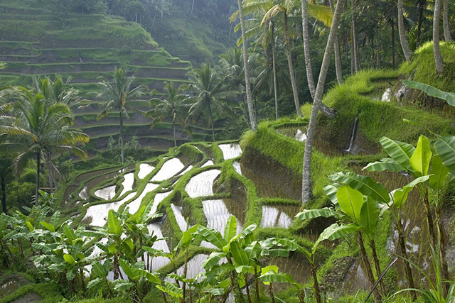 3.	Bali. Yes, it's overpopulated by Aussies, but if you avoid Kuta it's hard to beat Ubud for yoga and rice paddies; Seminyak for luxury hotels, fine dining and shopping; and Uluwatu for jaw-dropping views.