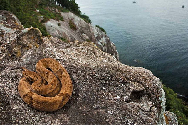 Snake Island, Brazil. Lethal vipers rule this island after being stranded when sea levels rose centuries ago. The snakes' venom evolved to become 5x stronger than the mainland equivalent, capable of killing prey instantly and melting human flesh.