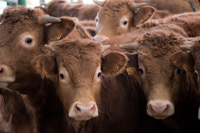 7. Factory farmed meat. The problem with many modern diets is not the consumption of meat per se, but the overconsumption of factory-farmed meat. The life of a factory-farmed cow – fattened up on grains and corn and medicated with antibiotics and hormones