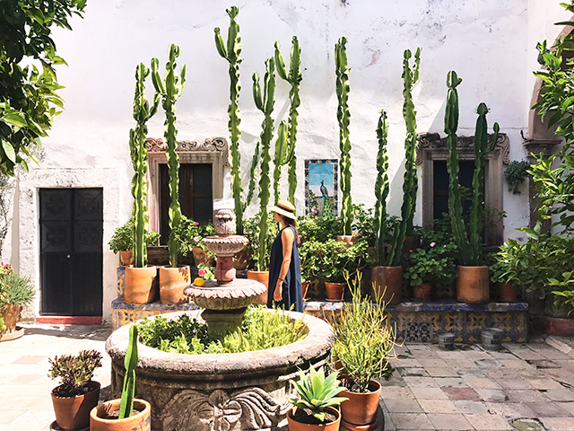 Walking in a picture perfect cacti courtyard.