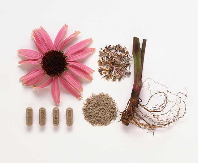 Echinacea, Andrographis and Olive Leaf