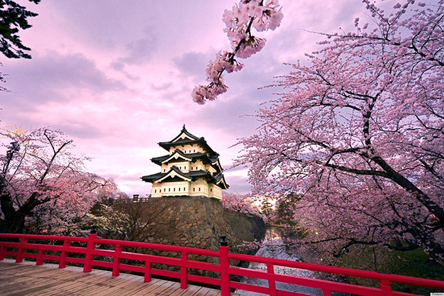 Hirosaki Castle, Japan: Japanese cherry blossoms in full bloom. Enough said.