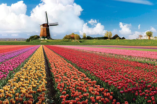 Keukenhof Park, Netherlands: This tulip park in Holland is stacked with fragrance, eye candy, and a windmill - it's the travel trifecta.