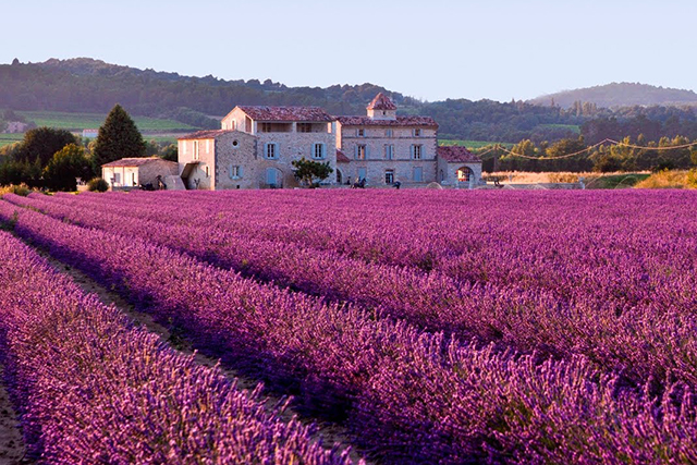 Provence, France: The lavender fields in Provence are a bucket list must-see. So pretty it hurts.