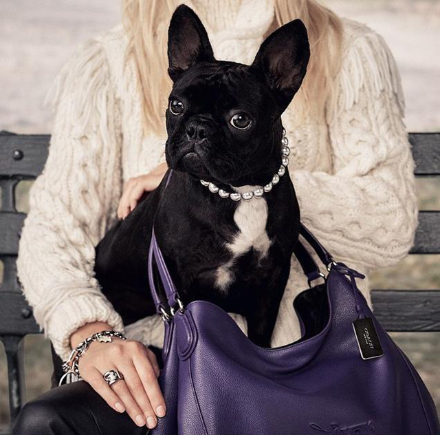 Are these pets stealing models' thunder?