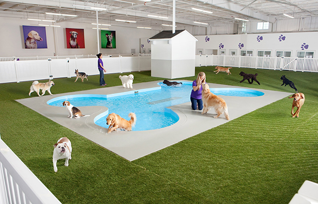 Jetsetting pets: the crazy luxury animal terminal coming to JFK Airport