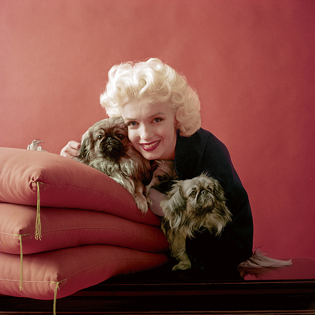 "February 1955, for LOOK magazine.<p><span style=""font-size: 17px;"">(Photo: Milton H. Greene &copy; 2017 Joshua Greene. From The Essential Marilyn Monroe. Photograph by Milton H. Greene.)</span></p>