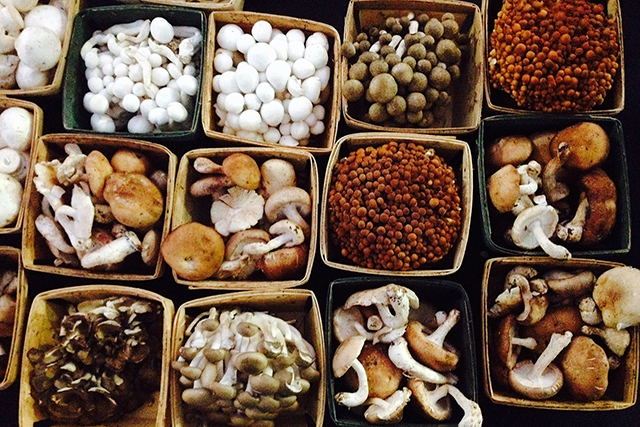 Mushrooms: the power of the humble 'shroom cannot be understated, they're chock full of all the good health items including vitamins, antioxidants, fibre, iron, zinc – so instead of an apple a day to keep the doctor away, sub in a mushroom a day.