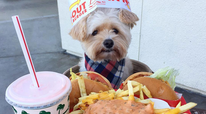 Love or lunch? Science says this is what your dog is really thinking