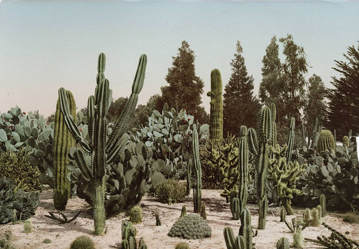 Attention succulent obsessed: a cactus festival is coming to Melbourne